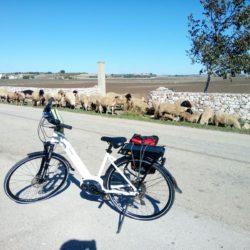 in-bicicletta-matera-ad-altamura-fra-murgia-e-campagna-bh-emotion-xenion-city-1