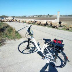 in-bicicletta-matera-ad-altamura-fra-murgia-e-campagna-bh-emotion-xenion-city