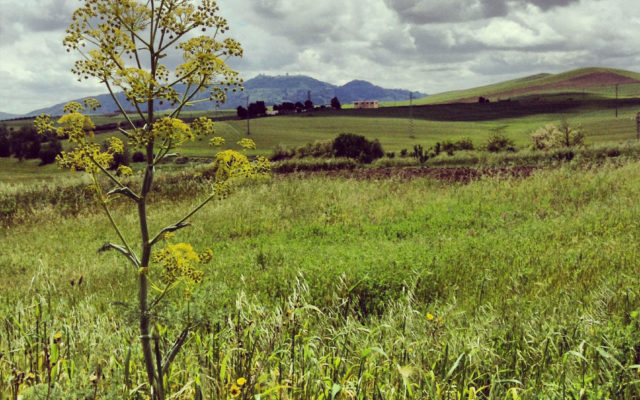 valle-del-bradano-in-bicicletta-Montescaglioso-da-Parco-dei-Monaci