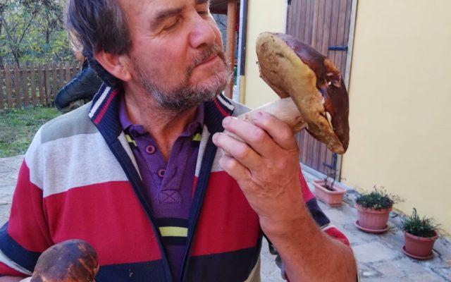 visita-parco-pollino-funghi