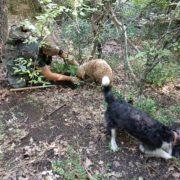 Due cani tartufo con l'esperto tartufaio nei boschi di San Mauro Forte